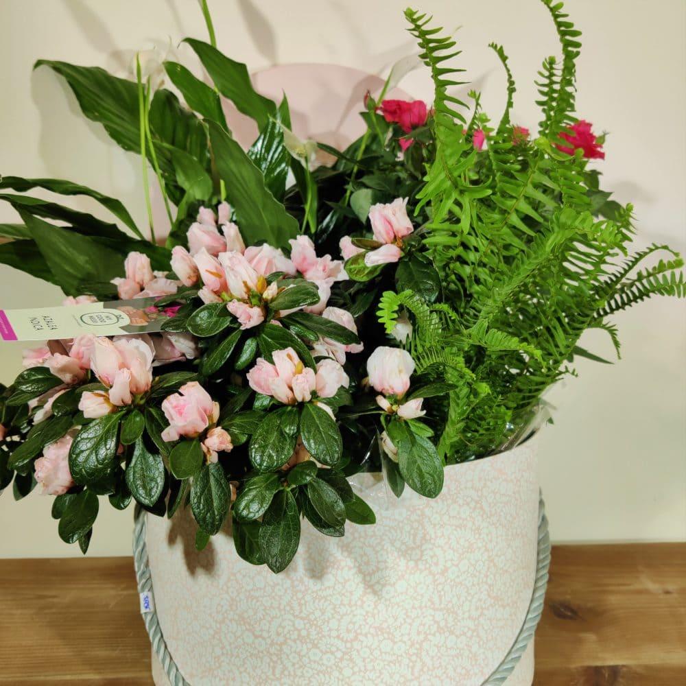 cesta de plantas variadas