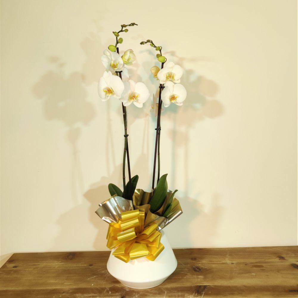 orquidea macetero diseño